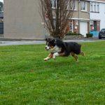 Photo en couleur, portrait d'un chien en train de jouer